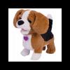 Catelusul Beagle - Zigo